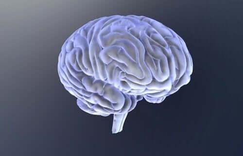 Hjerne.