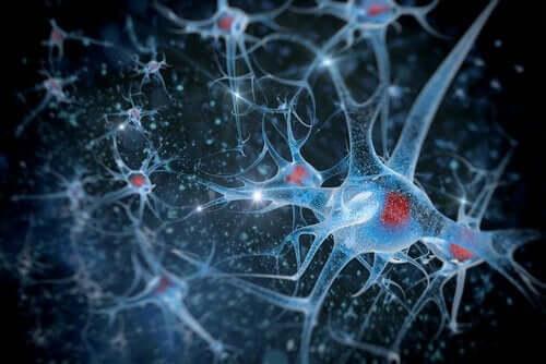 Nevroner, biopsykologi og forskningsmetoder