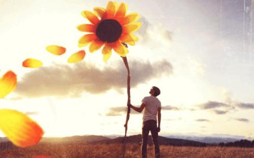 Mann som holder gigantisk solsikke