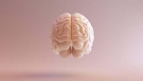 Historien om nevrovitenskap: En kortversjon