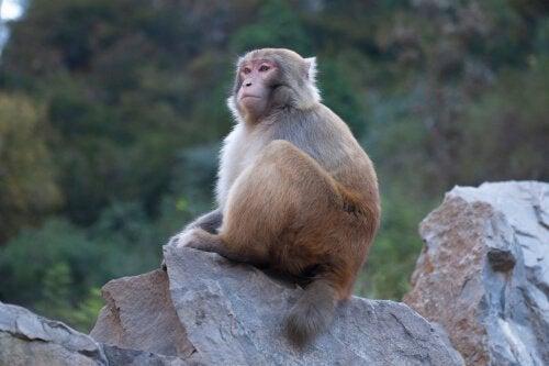 Ape og dyrs bevissthet