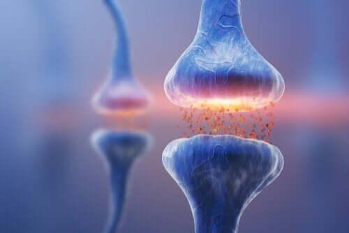 De ulike synapsetypene: Nevral kommunikasjon