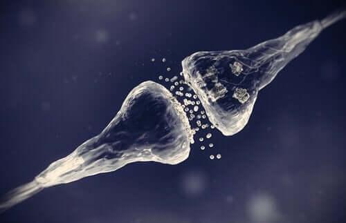 Synapsetypene