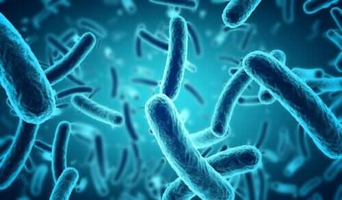 Hvordan ender tarmbakterier opp i hjernens mikrobiom?