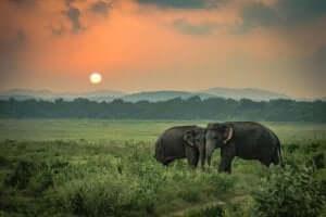 De triste elefantene: En sann historie