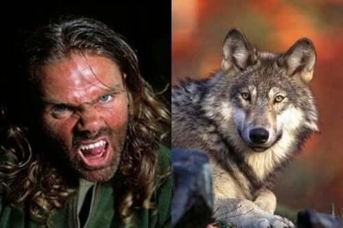 Ellis og ulv