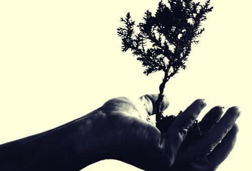 En hånd som holder opp et lite tre.