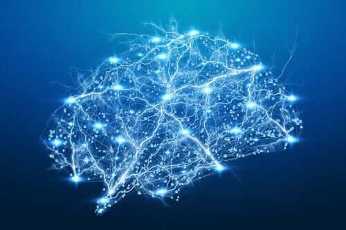 En hjerneillustrasjon som viser opplyste nevrale traséer.