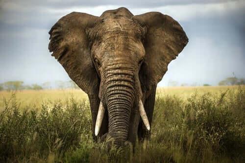 Å verdsette andres meninger: Elefanten og de seks vise mennene