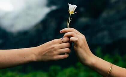 En hånd gir og en annen hånd tar en hvit rose