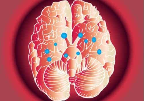 De fantastiske nervene i hjernen og funksjonen deres