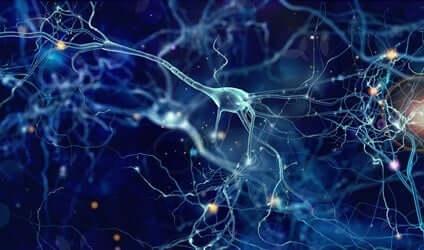 Nevronene våre trenger søvn for å repareres.