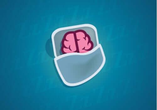 Hva skjer med nevronene våre mens vi sover?
