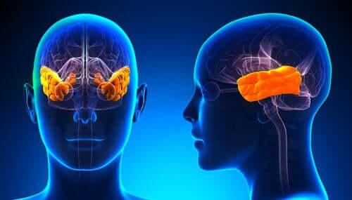 Klüver-Bucys syndrom: Tapet av frykt