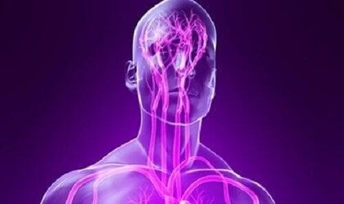 Illustrasjon-av-nervesystemet.