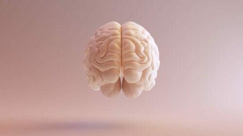 Det har inntil nylig fantes mange ukjente områder i hjernen.