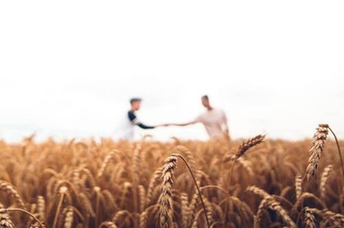 To menn strekker hendene mot hverandre i en korn åker