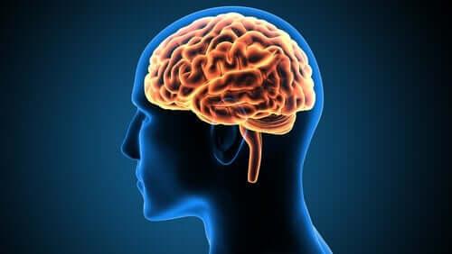 Alt om den fascinerende cingulate gyrus