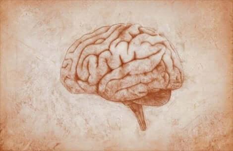 Forskere er opptatt av å forske på endringer i hjernen for å lære mer om stemningslidelser.