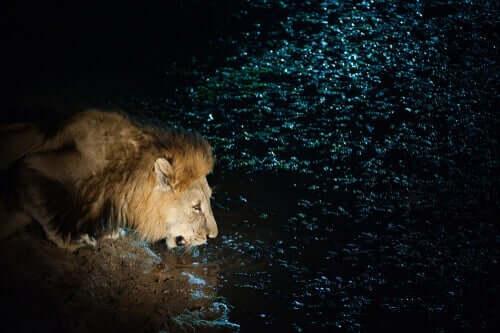 Den forsiktige løven, en annen fantastisk novelle