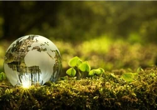 Hvordan kan jeg bidra til å forbedre miljøet?
