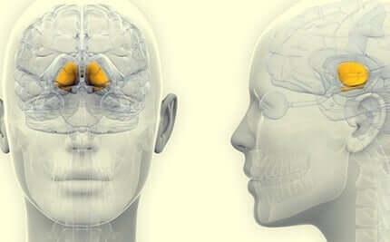 Substantia nigra ligger i midthjernen