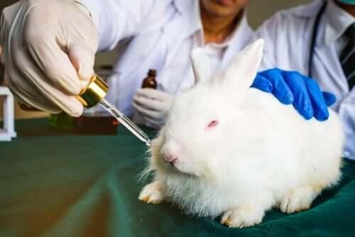 En kanin som blir testet på.