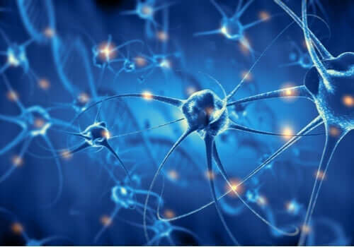 Nevroner