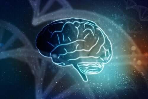 En illustrasjon av menneskehjernen