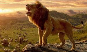 En brølende løve ser en rekke dyr vandre på savannen.