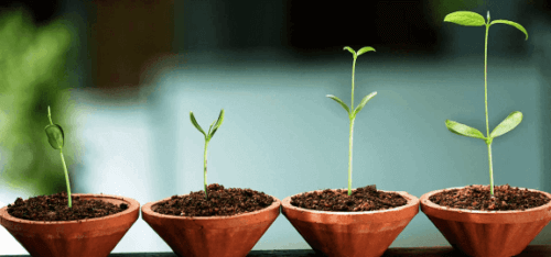 Et bilde av fire voksende plantestengler som symboliserer integrert psykologi.