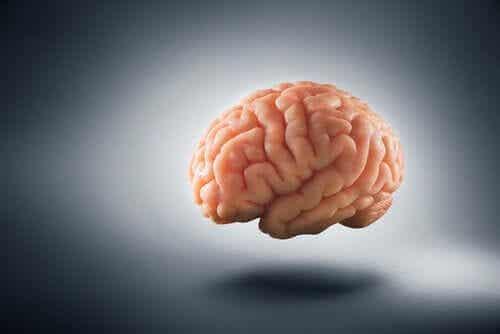 Hvordan fattigdom forandrer menneskehjernen