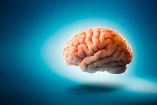 Seks merkelige hjernefakta du neppe kjenner til
