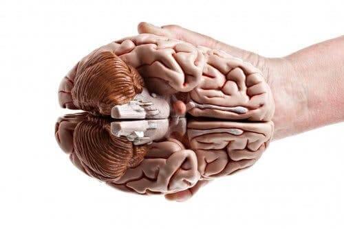 En hånd som holder en hjerne.