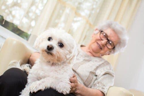 Dyreassistert terapi er svært fordelaktig for Alzheimers-pasienter.