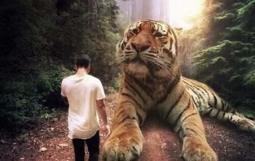 En mann som går ved siden av en stor tiger.