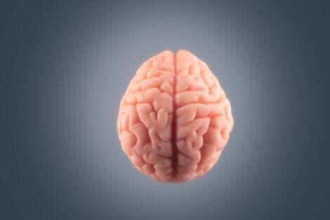 Et bilde av en hjerne.