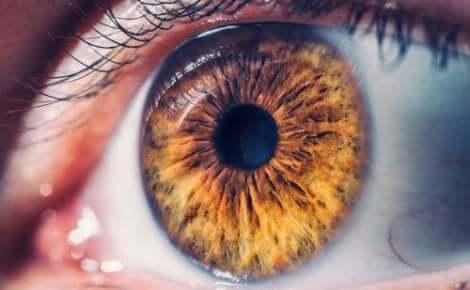 Et nærbilde av et brunt øye.