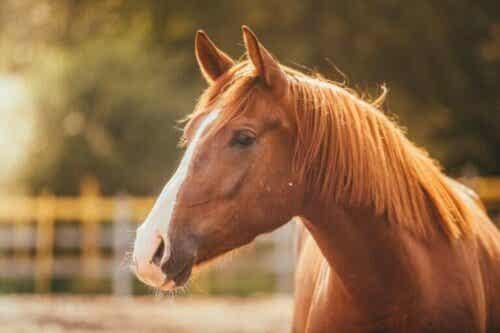 Frykten for hester: Equinofobi eller hippofobi