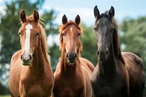 Tre hester.