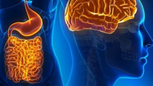Det fascinerende livet til tarmnevroner