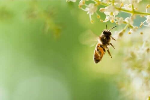 En bie.