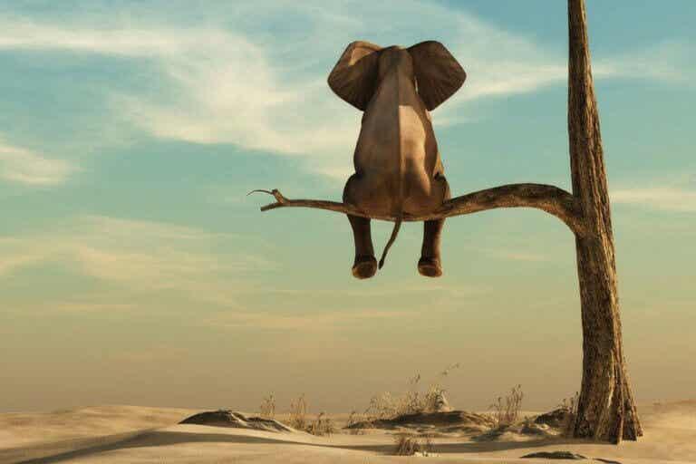 Når fettfobi er den egentlige elefanten i rommet