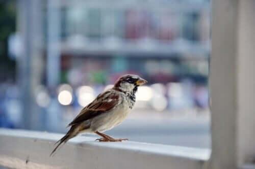 En fugl.