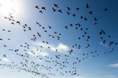 Tre måter å overvinne frykt for fugler på