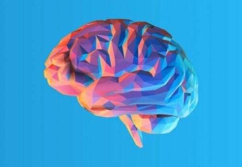Hjernen vår har folder, men hvorfor har den det?