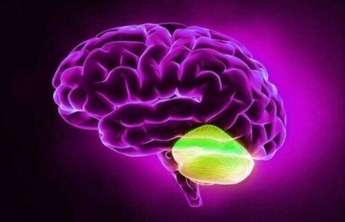 Lillehjernen og divergent tenkning