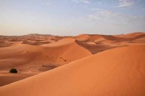 Sahara-ørkenen.