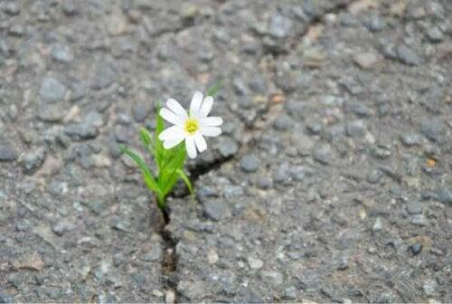 En blomst som vokser på veien.