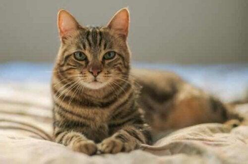 En katt på en seng.